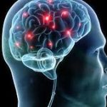 brain coordination motion